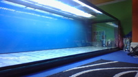 AQUARIUM 840 LITERS - 380 pounds