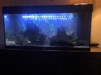 Tank and accessories for sale