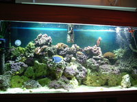 60x24x18 Marine Tank Complete for sale �0.00 OVNO