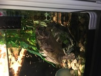 Full musk turtle set up