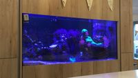 Large shop display tank for sale.