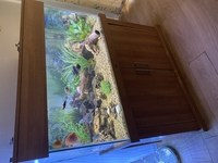 For sale Fish Tank and full set up