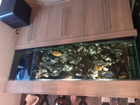6ft aquarium