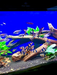 Loads of fish & Cleair Aquatics full set up 200 x 80 x 60cm