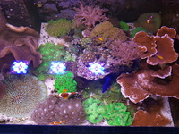 All corals and tank up for sale.