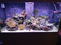 Live rock, corals, fish in Marine tank full set up