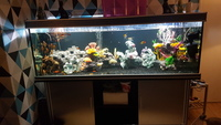 6ft x2ft x2ft aquarium full setup �0