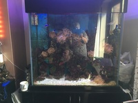 Marine tank and full set up �0