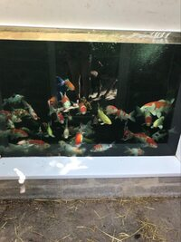 Howie Koi Dorset - Pond Maintenance and New Pond Set Ups