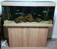 eheim 4ft fish tank with lid and stand