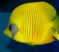 Addis Butterfly fish sale.. card payment welcome