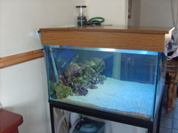 COMPLETE MARINE SET UP FULLY MATURED