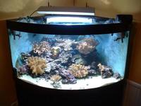 juwel trigon 350 at aquarist classifieds. Black Bedroom Furniture Sets. Home Design Ideas