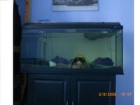 3ft Fish tank with all accessories (heater. filter and more) plus stand