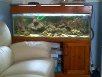 marine aqaurium full setup urgent sale BARGIN PRICE