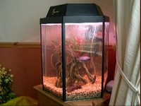 FOR SALE - 25 GALLON TANK WITH FILTER, HEATER, AFRICAN CICHLID FISH AND LOADS OF OTHER BITS!!
