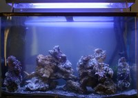30g Marine Tank, Fully Mature with Livestock. �400 ovno (RRP �860)