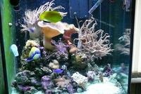 Complete Easy to Maintain Marine Tank Set-up