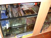 Fit Filtration 4 ft Reef tank and sump