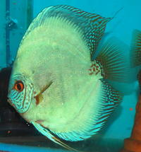 wide variety of discus in south wales