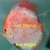 Discus fish for sale. Buy 5 get 2 free or buy 10 get 5 free. Thousands in stock