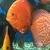 TODAYS STOCK ON YOUTUBE ,,,,NOW,,,,, DISCUS,,DISCUS,,DISCUS , TROPICAL FISH SALE